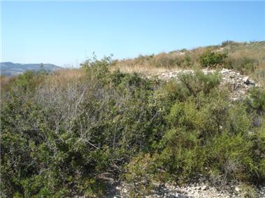Land for sale in Vavla