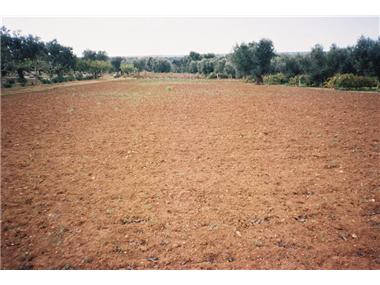Land for sale in Lecce