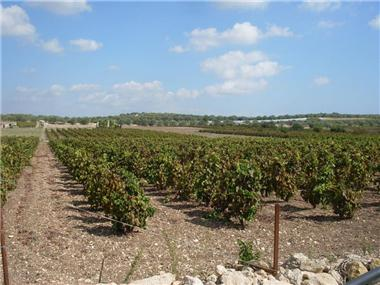 Land for sale in Noto