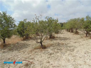 Agricultural Land for sale in Paphos