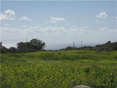 Land for sale in Zurrieq