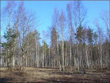 Land/Ruins for sale in Tallinn