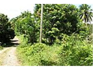 Development Land for sale in Saint Andrew