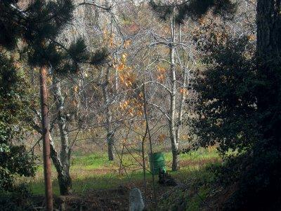 Land/Ruins for sale in Prodhromos