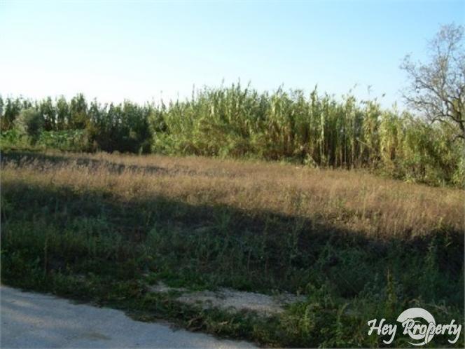 Land/Ruins for sale in Souto da Carpalhosa