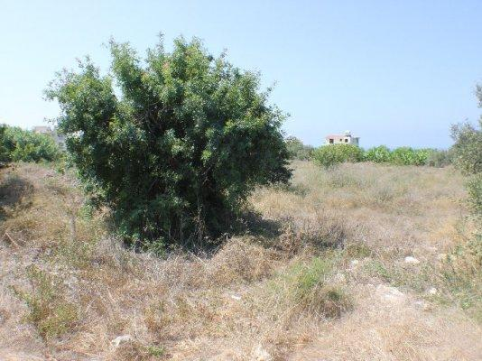 Land/Ruins for sale in Kissonerga