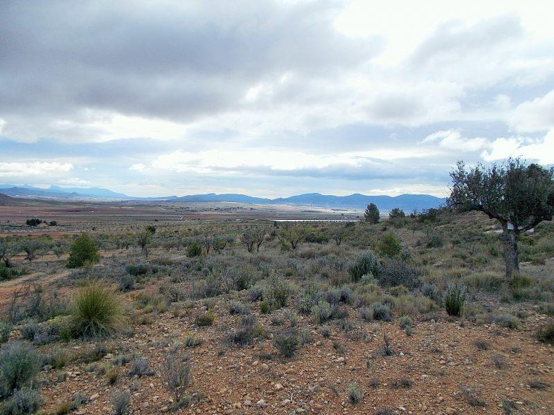 Land/Ruins for sale in Yecla
